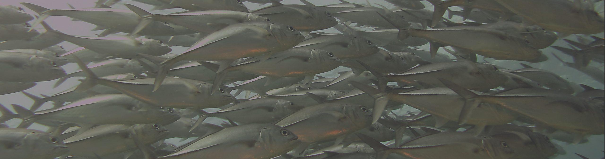 On aurait pu croire à un poisson d'avril, mais non c'est la triste réalité. Les alternatives aux lingettes jetables.